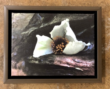 "Wendy Marshall ""Mountain Camellia"" photo"