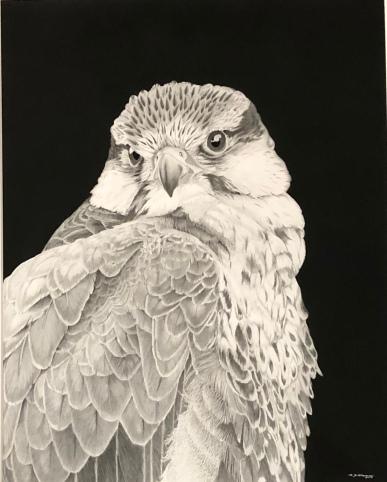 """Mark Thomas """"Perregrine Falcon"""" graphite"""